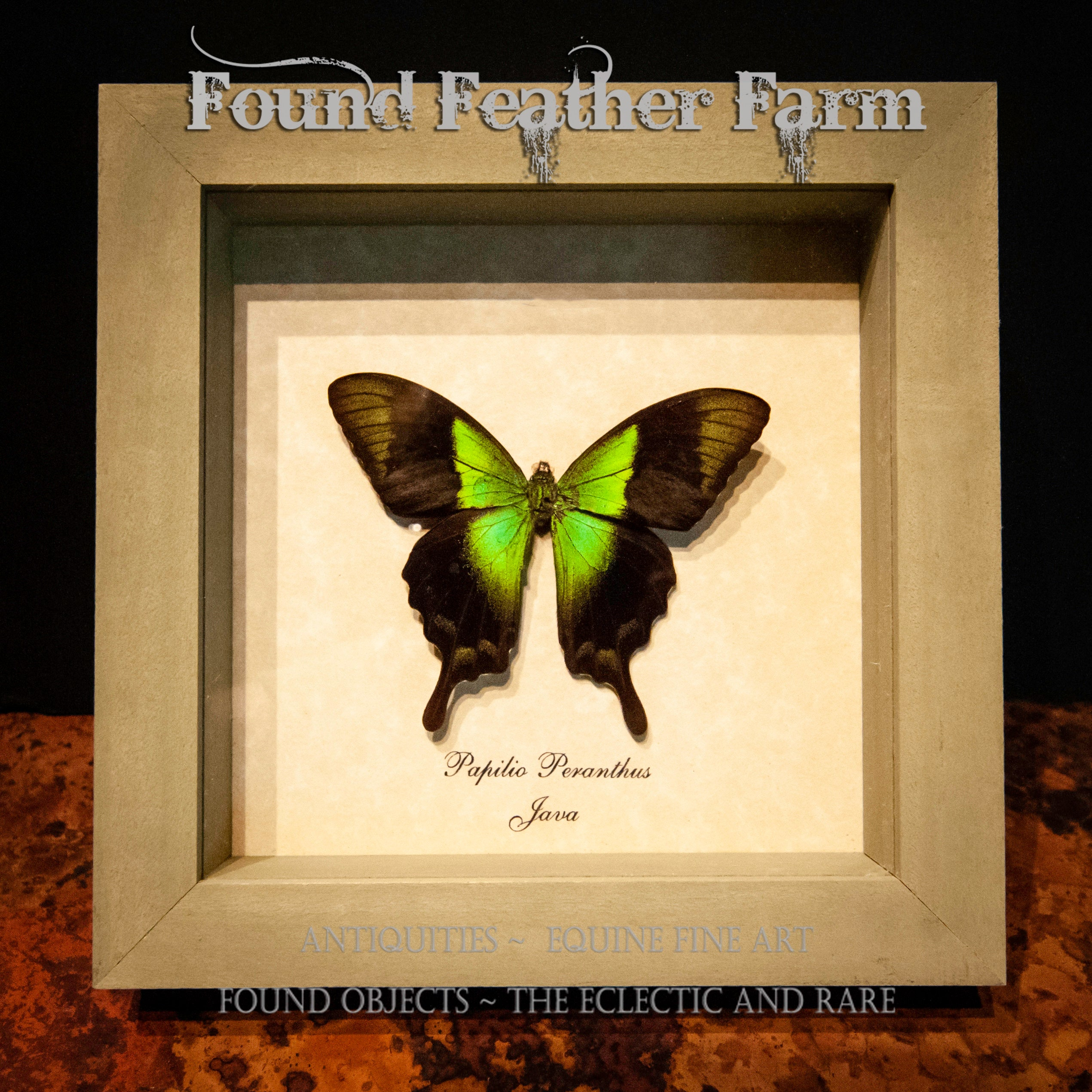 Beautiful Vintage Dazzling Green Butterfly Mount From Java