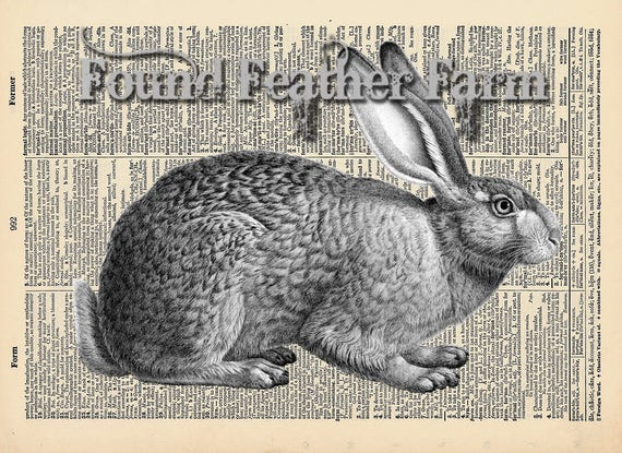 "Vintage Antique Dictionary Page with Antique Print ""Antique Rabbit Etching Horizontal"""