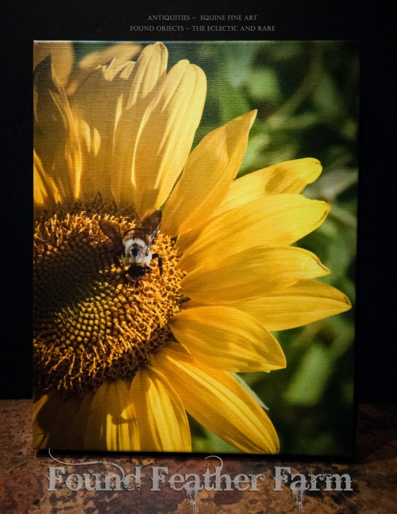 "Fine Art Photograph Giclee ""The Sunflower and the Bee""  on Canvas Signed by the Artist"