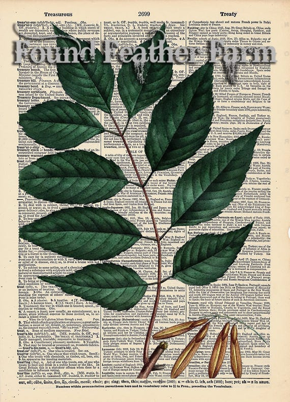 """Vintage Antique Dictionary Page with Antique Print """"Green Ash :Leaves"""""""