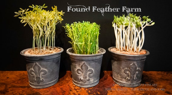 Vintage Inspired Zinc Finished Metal Fleur de Lis Flower Pot