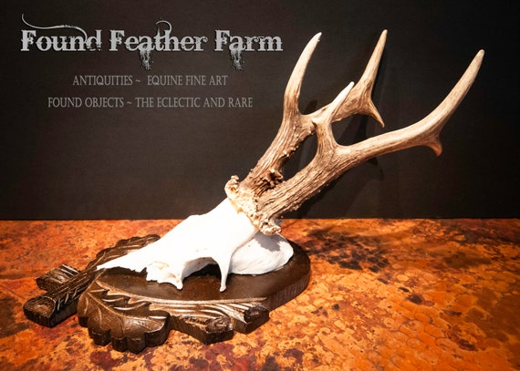 Antique Large Roe Deer Buck Skull and Antler Mount on a Handcarved Wooden Plaque from The Black Forest Circa 1984