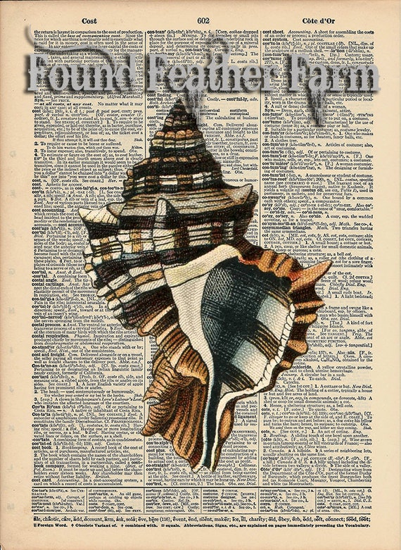 """Vintage Antique Dictionary Page with Antique Print """"Shell Three"""""""