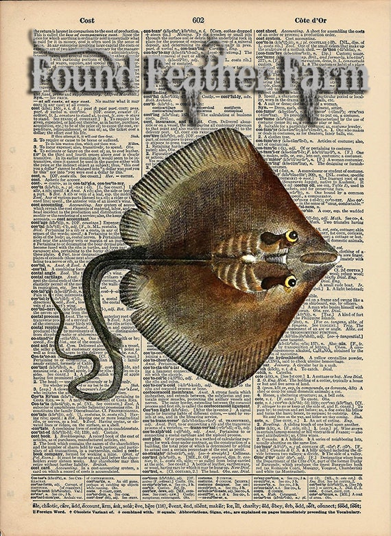 """Vintage Antique Dictionary Page with Antique Print """"Stingray"""""""