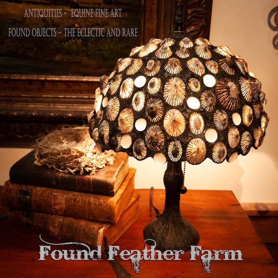 Fabulous One of a Kind Original Design Handmade Limpet Shell Accent Lamp