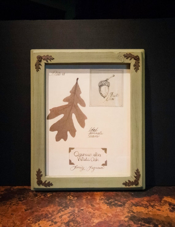 Framed White Oak Leaf Print