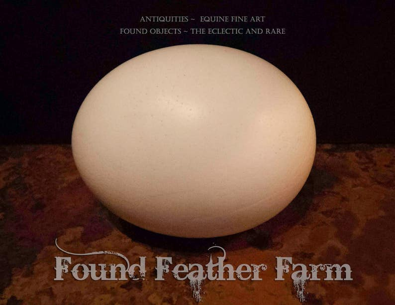 Natural Extra Large African Ostrich Egg