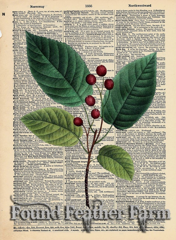 "Vintage Antique Dictionary Page with Antique Print ""June Berry Leaves"""