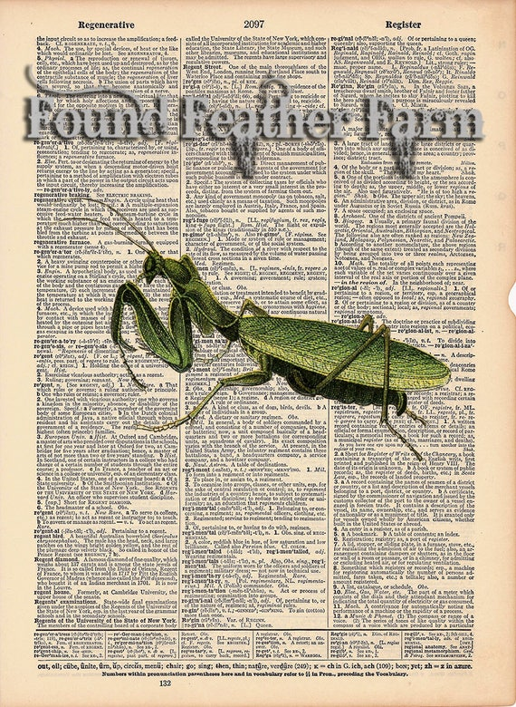 "Vintage Antique Dictionary Page with Antique Print ""Praying Mantis"""