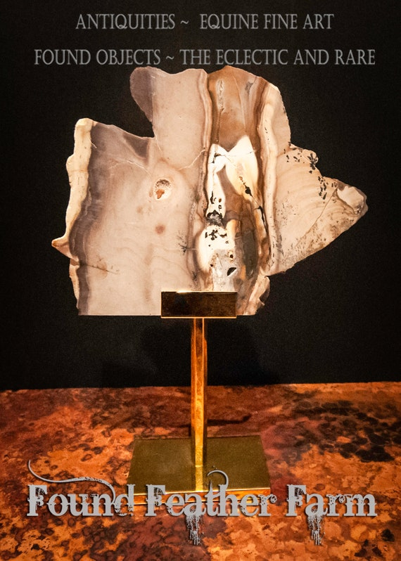 Slice of Petrified Wood Dispayed on a 24K Gold Plated Display Stand