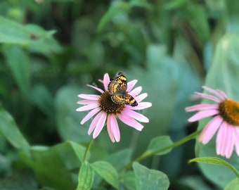 """iPhone Photo 