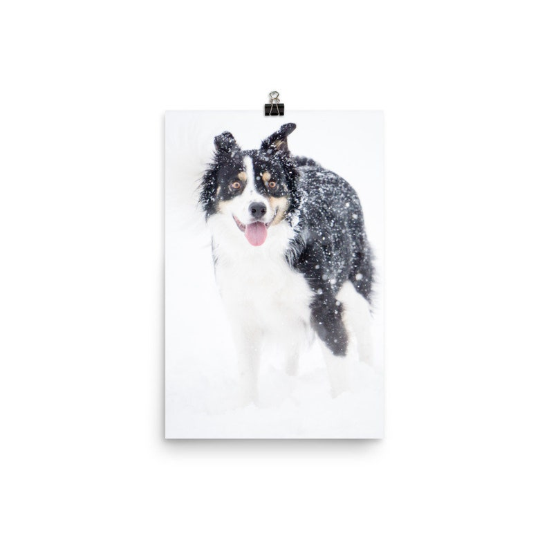 Wall Art Pet Portrait Winter Fun Photo print on lustre paper Photography