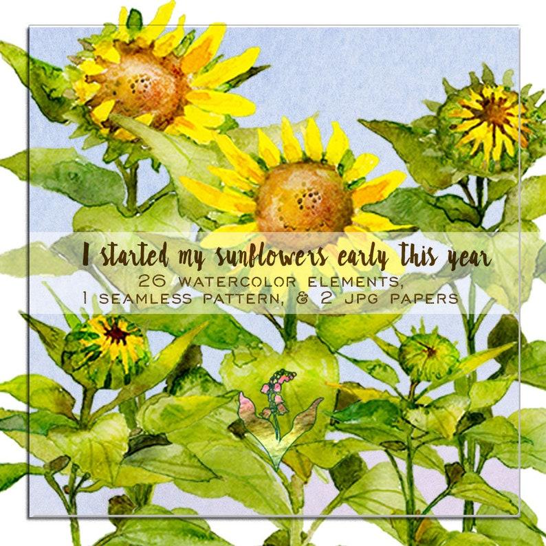 sunflower clipart Watercolor sunflowers clipart flowers Watercolor flowers sunflower clipart sunflower painting watercolor clipart