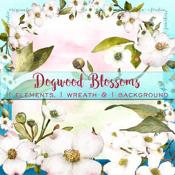 Watercolor Flowers Dogwood Clipart Clipart Flowers Etsy