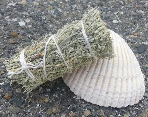 Sage/ Seashell/ Incense/ Vintage Shell/ Candles/ Home and Living/ Gift/ Gift for him/ Gift for her/ Natural/ Tree