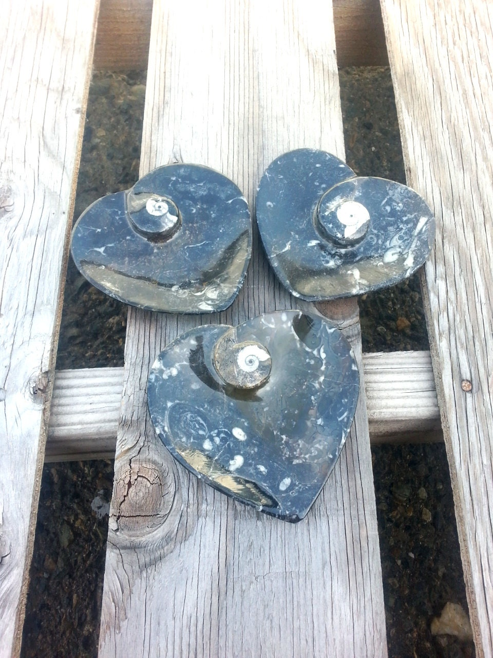 Orthocerss Dish/ Heart/ Ammonite/ Fossil/ Vintage Soap Dish/ Jewelry ...