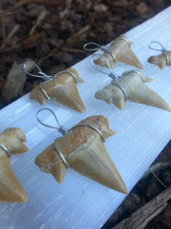 Shark Teeth/ Pendant/ Fossil/ Jewelry Supplies/ Craft Supplies/ Handmade/ History/ Teaching Aid/ Unique Gift/ Beading Supplies