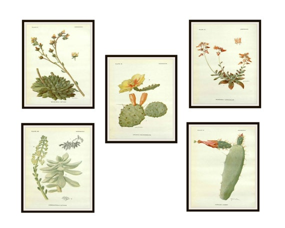 """Set of 5 Vintage Botanical Art Print Poster Reproductions /""""Cactus and Succulents"""