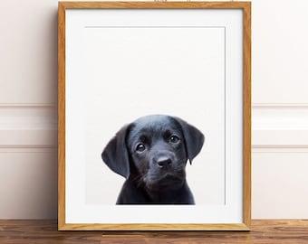 004f9a8c2995 Dog print