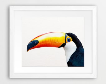 Bird Print, Toucan Bird, Tropical Parrot Wall Art, Parrot Photo Colourful, Blue Black Orange, Tropical Decor, Bird Photography Printable Art