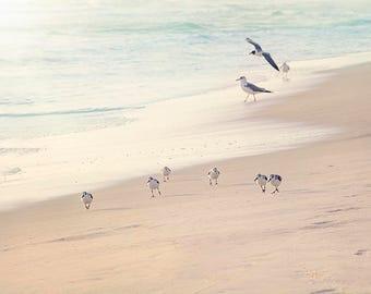 Bird Photography, Sand Piper Wall Art, Beach Photo, Coastal Wall Art, Bird Art Print, Bathroom Wall Art, Beach Photography, Bird Photo