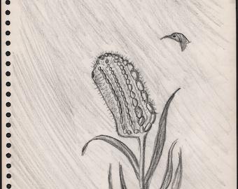 pencil drawing by Denis Grundmann Hummingbird dg from 1971 approx 8.25 x 11 inches Isla Vista outsider art brut