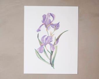 """Iris Watercolor Artprint 8""""x10"""""""