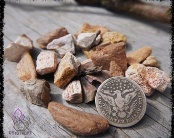 FOSSILIZED DINOSAUR BONE 100g | Fossils | Crystal Grid | Gemstone Ring | Necklace | Jewelry Supplies | Sacred Geometry | Psychic