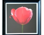 Drawing of a beautiful tulip / Home decoration or as a gift for someone special  / Shipped complete with frame