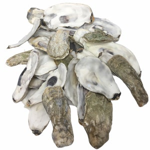 Clean Oyster Shells for Landscaping Large Flat Rate Box Aquariums min 7lbs