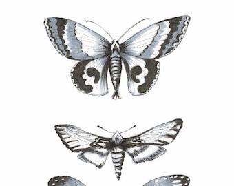Tres butterflies print