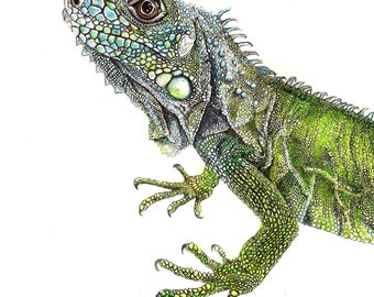 Wildlife wall decor Reptiles 1891 LIZARDS Original Antique Encyclopaedia Illustration Iguana home decor Scink Seps Tridactylus