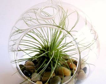 Round Glass Terrarium  (Only)  (EA)