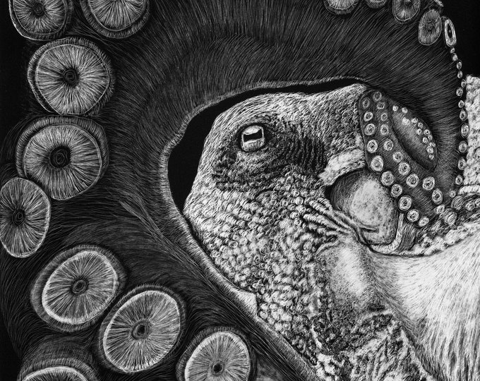 FREE SHIPPING!  Choose your cephalopod!  Octopus available - one of a kind or limited prints!