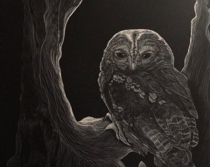 Free shipping!! Owls -- Metal print reproductions of my orginal work!!! Scratchboard reproductions!