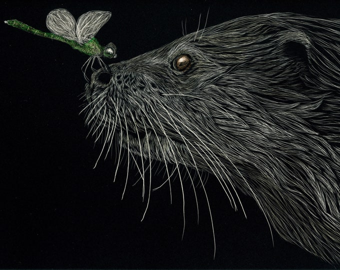 Pick an otter -- any otter!  Free shipping for one of a kind scratchboards!