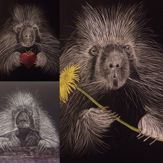 8 inch x  8 inch What's the Point?  Porcupine scratchboard - free shipping for one of a kind item!