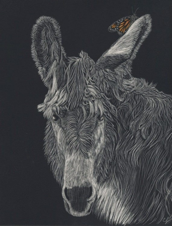 Donkey scratchboard - who doesn't love an ass?