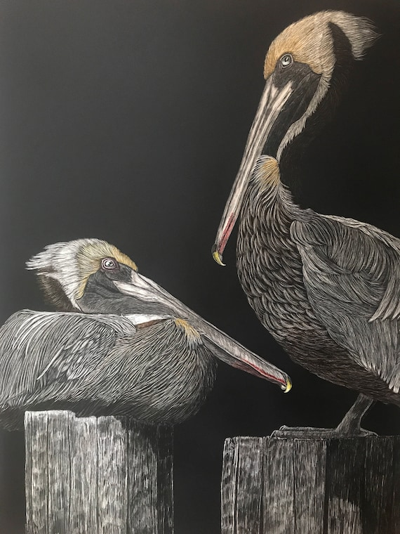 FREE SHIPPING!  Shoreline sentinels -- 18 x 24 inch scratchboard of pelicans!! One of a kind!