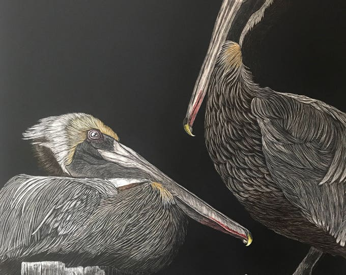 Shoreline sentinels -- 18 x 24 inch scratchboard of pelicans!! One of a kind!