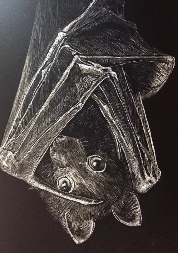 "For rv-l only: Flying Fox bat scratchboard -- one of a kind ""Feeling Batty"""
