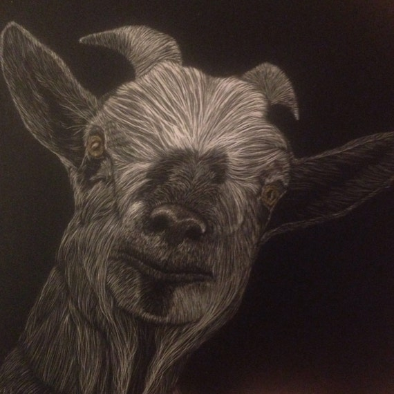 Got Your Goat scratchboard One of a Kind! Now ready in two sizes! Frames available!