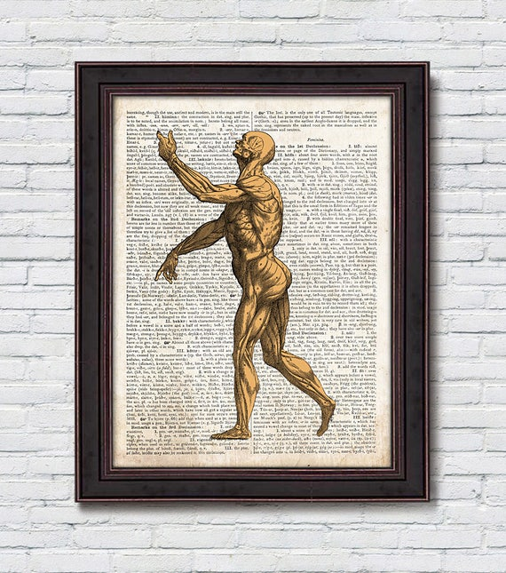 Human Body Dictionary Human Body Anatomy Muscles Dictionary Etsy