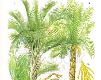 Vintage Palm Print - Sago Palm, Sugar Palms - 1970s produce print. 3 for 10