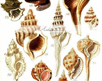 Digital Download Printable Art - Seashell Collection Shells Sea Shells Beach Ocean Vintage Art Image - Altered Art Paper Crafts Scrapbooking