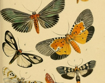 Printable Art Instant Download - Butterflies Antique Illustration - Paper Crafts Scrapbooking Altered Art - Butterfly Variety Insects Art
