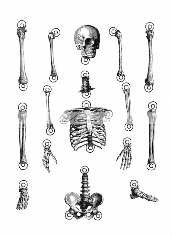 It is an image of Skeleton Cut Out Printable within skeleton diagram