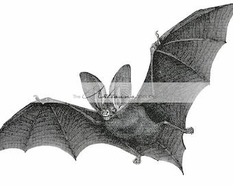 Instant Download - Antique Bat Illustration Image  - Paper Crafts Scrapbooking Altered Art - Bats Halloween Night Nocturnal Animal Mammal