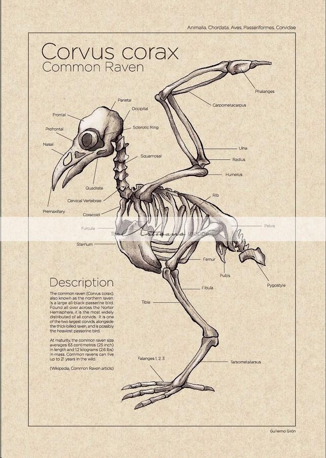 Instante de arte imprimible descargar Cuervo Cuervo diagrama | Etsy