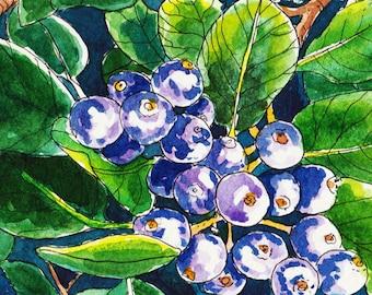 Purple Berries - Original watercolour painting